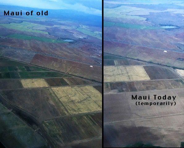 maui-green-gold